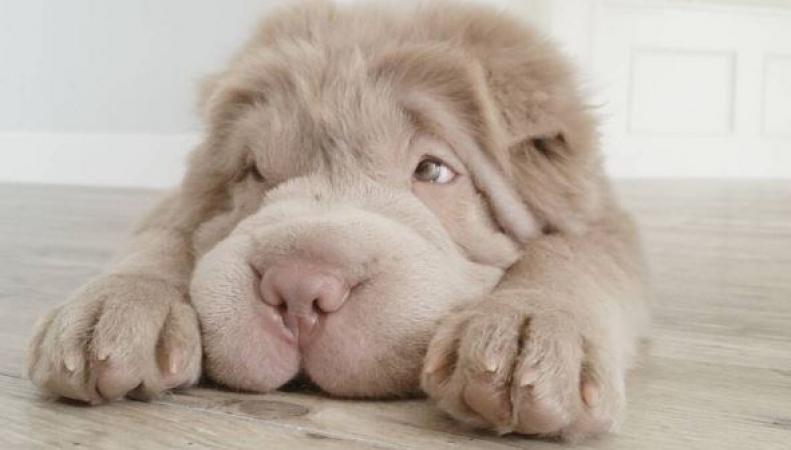 Топ-15 самых умилительных фото животных
