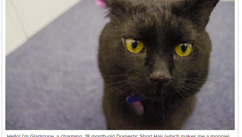 Новое назначение в Вестминстере: Штат котов-мышеловов расширен по запросу Хэммонда фото:theguardian.com