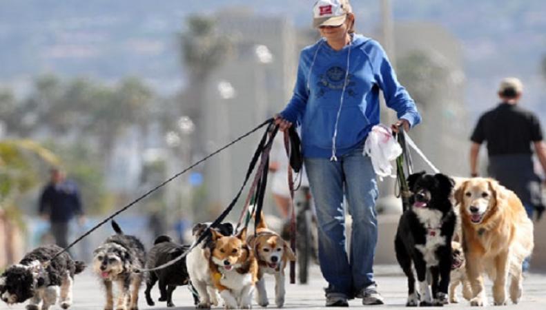 Владельцам собак предложили использовать беспилотник для выгула питомцев