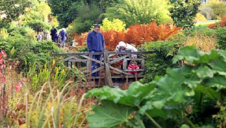 Исторические сады Суррея оказались под угрозой