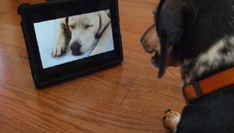 Собаки и телевизор
