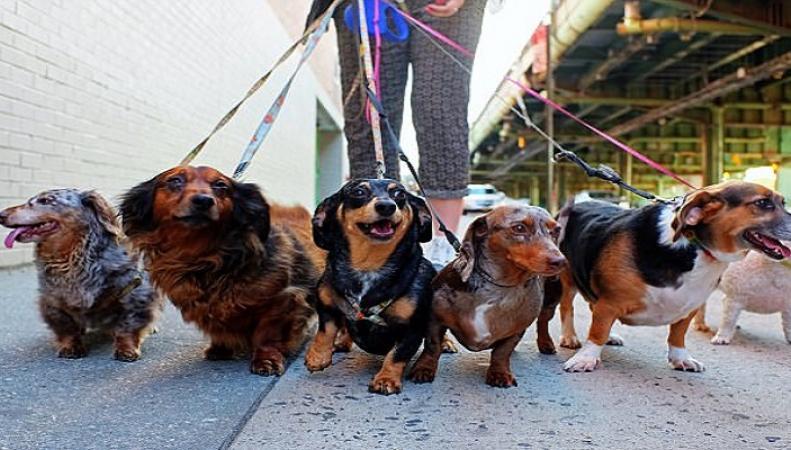 Владельцев собак предупредили о новых штрафах