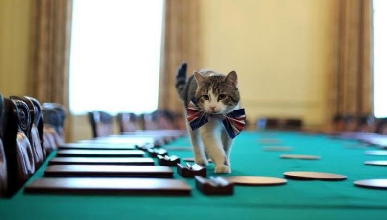 Дружба с мышами может лишить кота Ларри звания главного мышелова