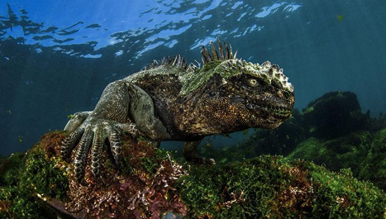 Итоги конкурса Underwater Photographer of the Year-2017