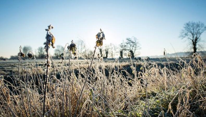 В ближайшие сутки Англию накроет ледяным туманом фото: theguardian.com