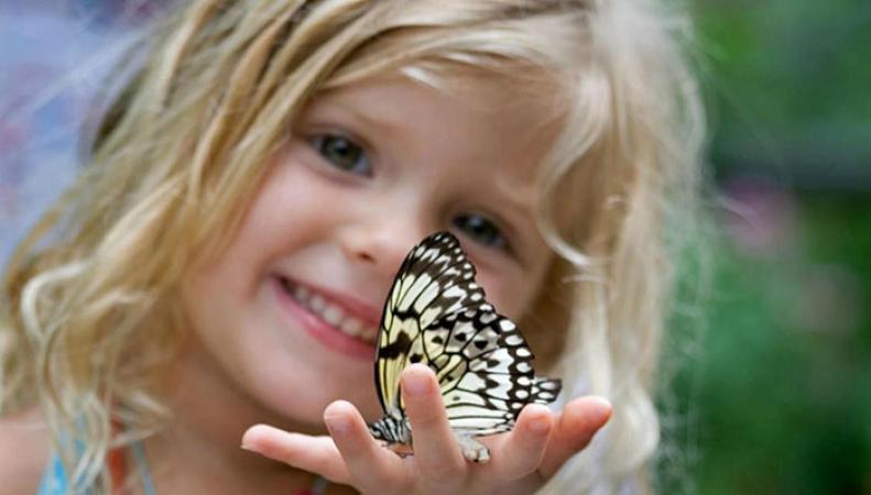 Исчезновение бабочек