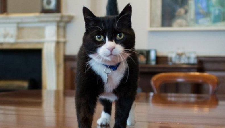 Кота из британского МИДа подозревают в шпионаже