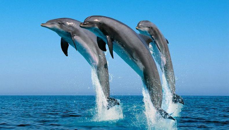 В Корнуолле стайка из 15 дельфинов устроила настоящее представление