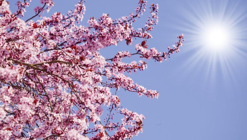 Британские синоптики обещают рекордно теплую Пасху