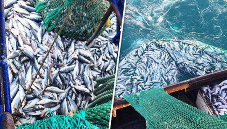 «Катастрофическая» политика ЕС в области рыболовства