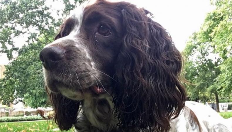 В британских школах могут появиться собаки-психотерапевты