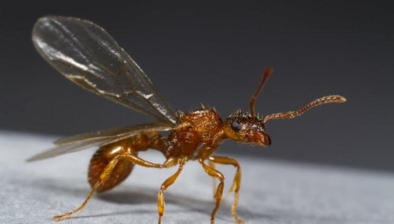 Летающие муравьи докучают зрителям Уимблдонского турнира