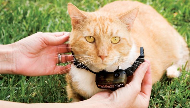 В Англии запретят электрические ошейники для домашних животных