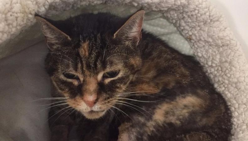 Стопка водки спасла жизнь лондонской кошке