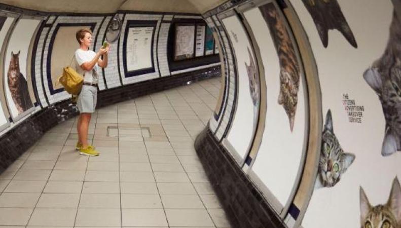 Коты оккупировали все рекламные площади на станции метро Clapham Common фото:standard.co.uk