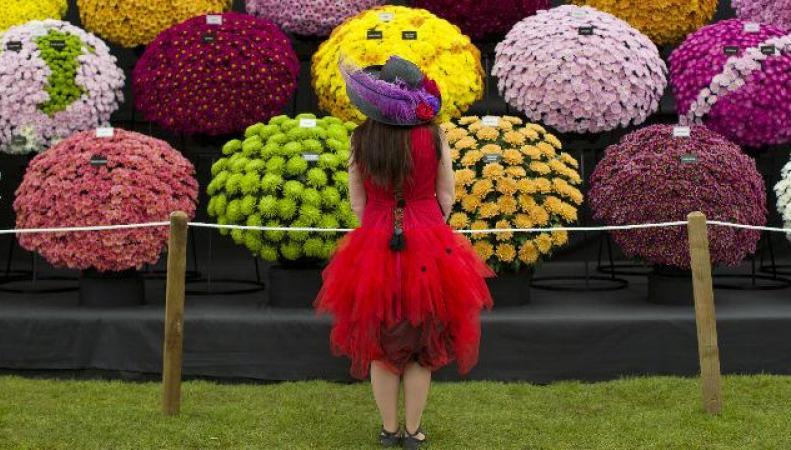 Спекулянты взвинтили цены на билеты на Chelsea Flower Show фото:visitlondon