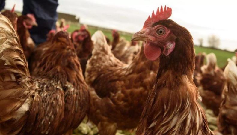 Торговый договор с США приведет к снижению качества продуктов питания в Великобритании