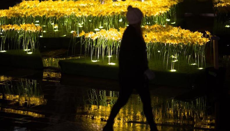 Поле светящихся нарциссов появилось возле Собора Святого Павла в Лондоне фото:timeout