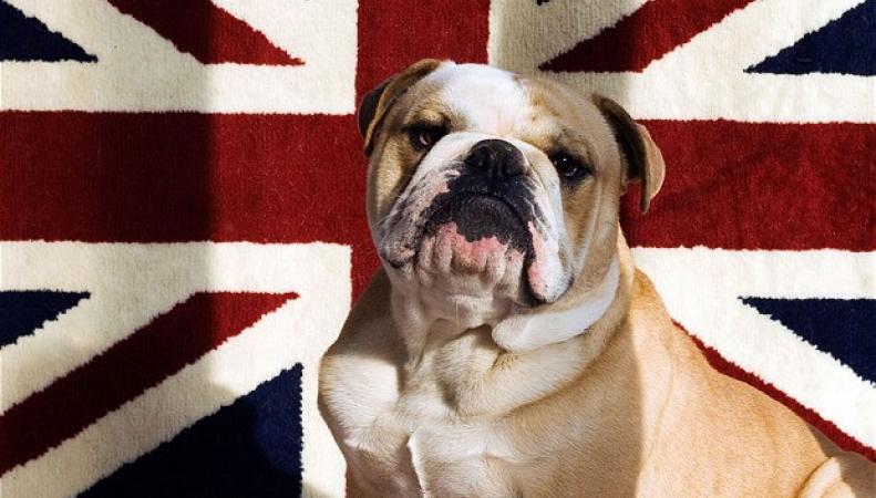 Кража собак в Англии