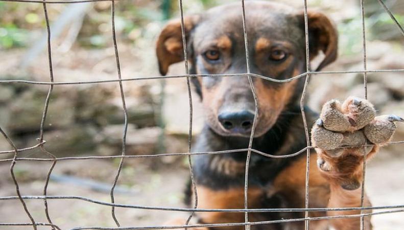 Правительство ужесточит наказание за жестокое обращение с животными