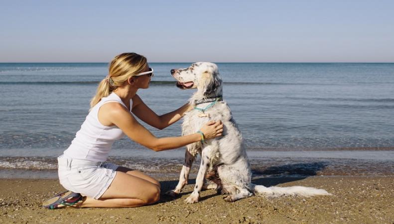 Запрет на прогулки с собаками ввелинекоторые пляжи Великобритании