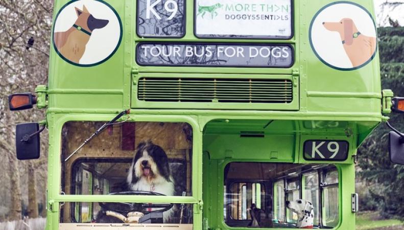 Экскурсионный автобус для фанатов-собаководов и их питомцев объедет центр Лондона фото:itv.com