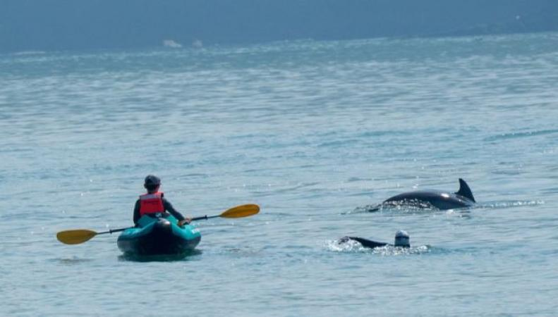 Жителей Уэльса предостерегли от общения с дельфинами