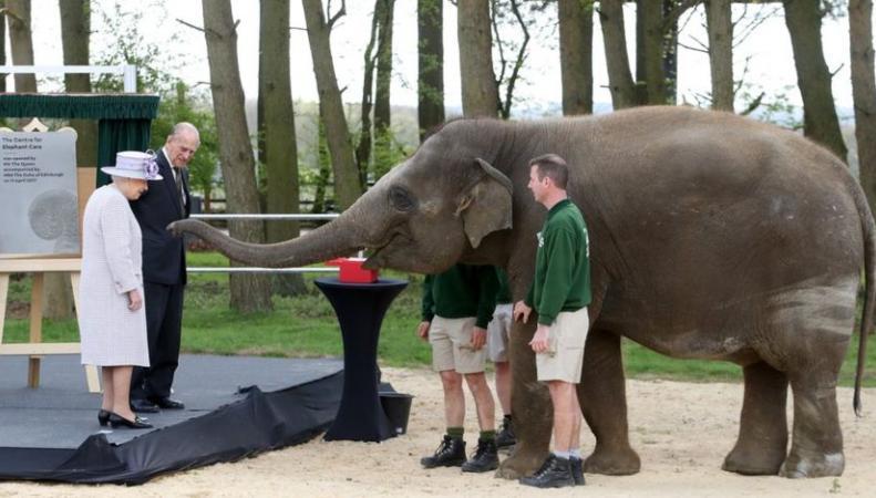 Королева Елизавета II покормила бананом слона на открытии нового зоологического центра фото:bbc
