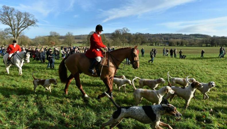 Запрет охоты на лис в Великобритании сохранится до 2022 года
