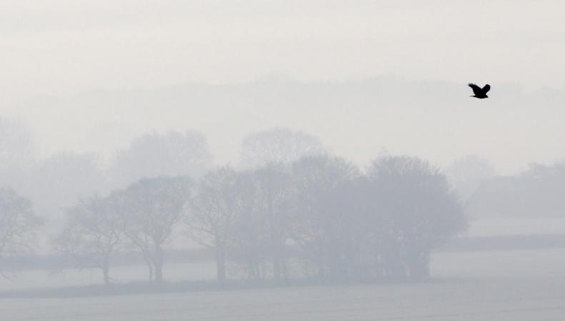 Встолице Англии из-за тумана отменены неменее 100 рейсов