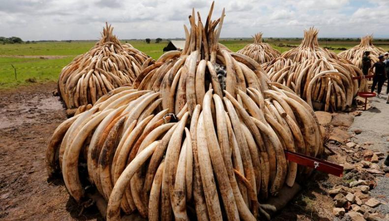 В Великобритании полностью запретят торговлю слоновой костью