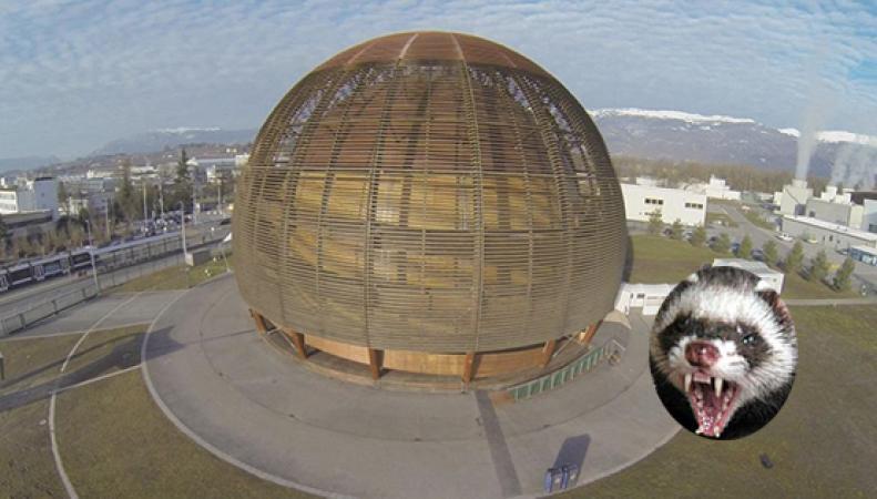 Хорек вывел из строя Большой адронный коллайдер