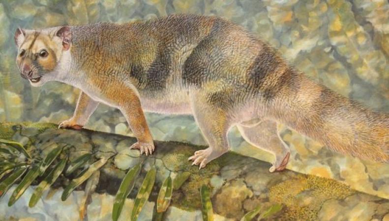 Ископаемый австралийский «микролев» назван в честь британского натуралиста