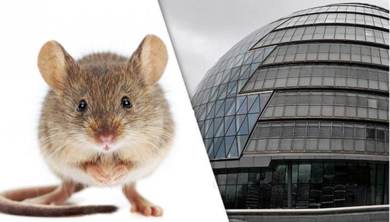 Мэрия Лондона вынуждена завести собственного кота-мышелова