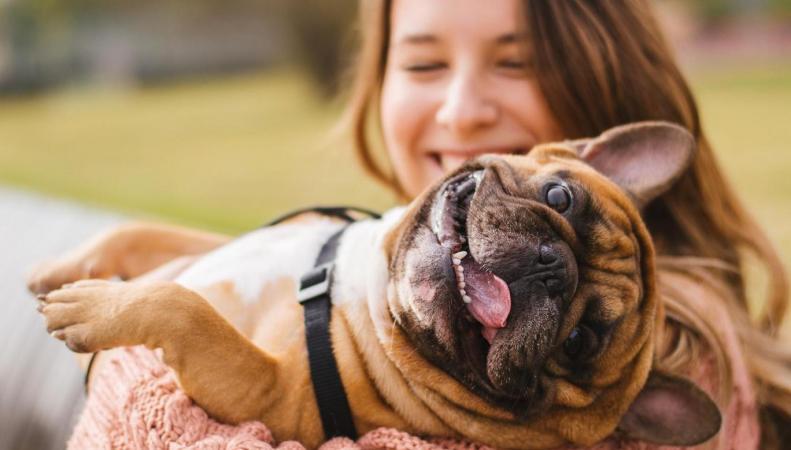 Год Собаки в Лондоне: названы самые популярные породы