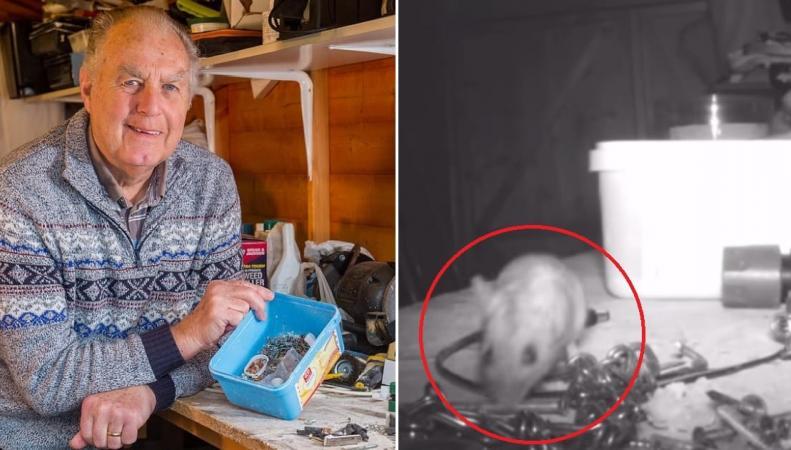 Педантичная мышь лишила покоя жителя Глостершира