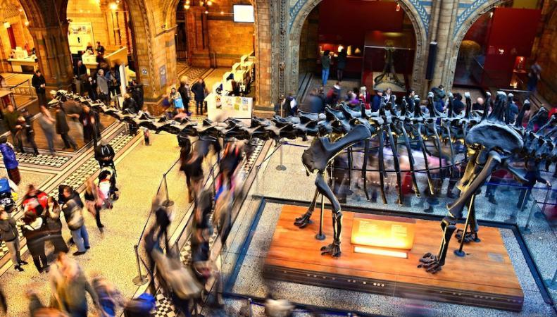 Natural History Museum открыл продажу билетов на «Последнюю ночь с динозавром»  фото:londonist.com