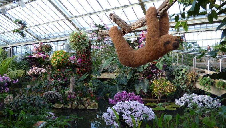 Ботанический сад Кью Гарденс приглашает на Фестиваль орхидей