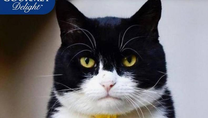 Министерский кот Палмерстон стал героем рекламы в Австралии