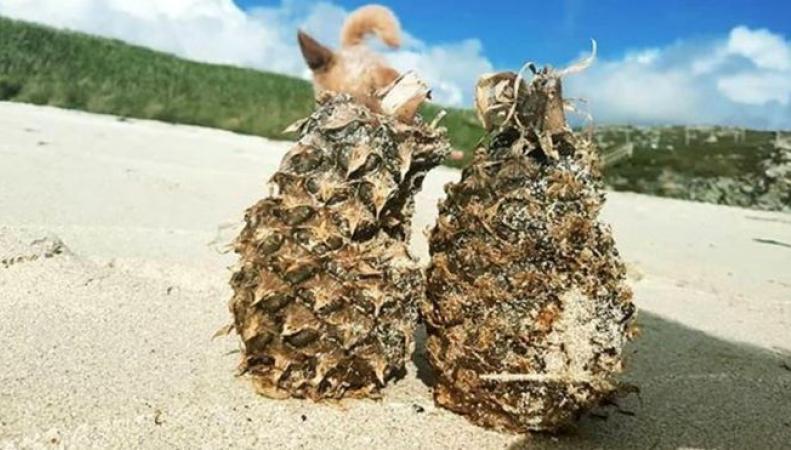 Побережье на севере Шотландии завалило ананасами