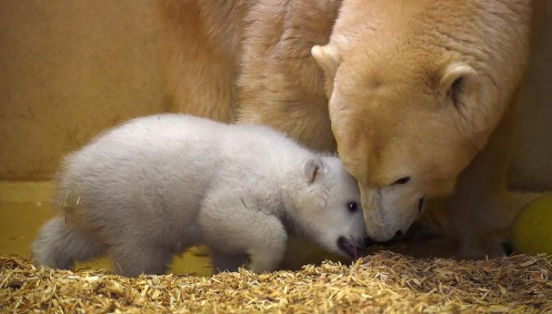 Шотландский белый медвежонок стал героем документального фильма