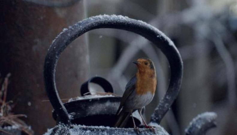 Сеть Waitrose представила рождественскую историю о любимой птице британцев   фото:standard.co.uk