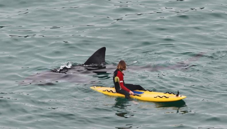 Гигантские акулы спровоцировали панику у побережья Корнуолла фото:metro.co.uk