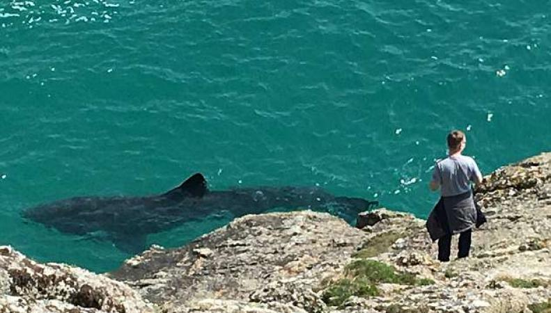 Акулы и косатки вернулись в британские воды