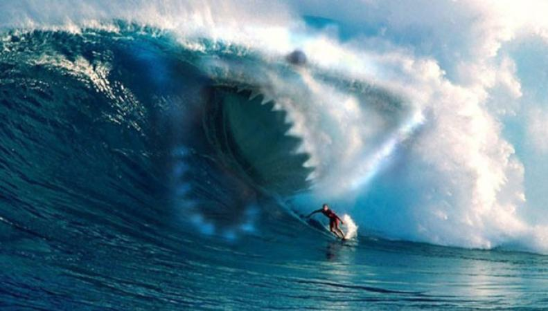 Акула напала на британца у побережья Девона