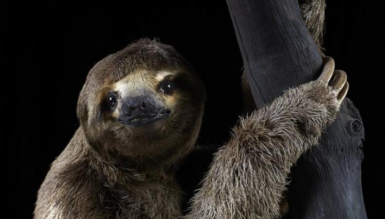 Музей естествознания открыл экспозицию о  жизни ночных существ