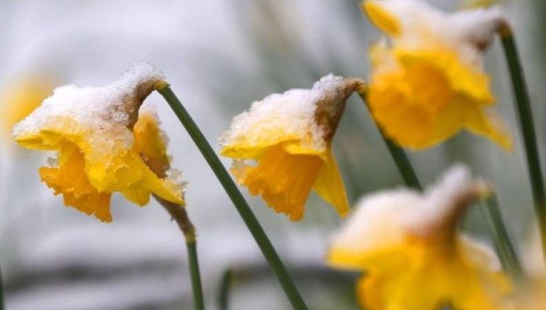 снег в апреле выпал в Британии