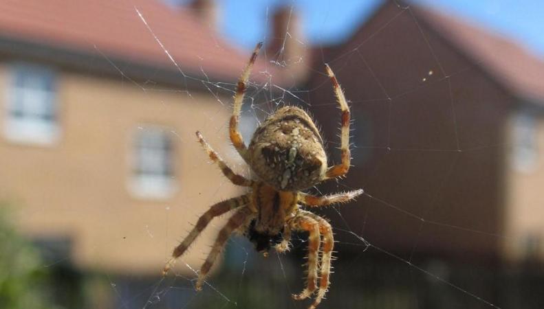 На юге Англии расплодились пауки – как отвадить их от дома фото:standard