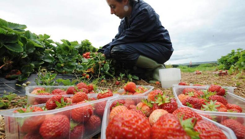 Британские фермеры лишатся урожая из-за Брекзита