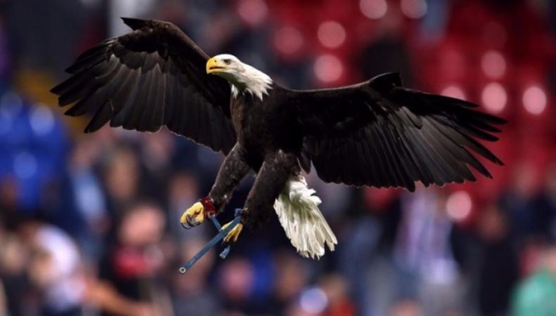 Фанат Charlton Athletic отправился в тюрьму за атаку на талисман команды Crystal Palace фото:itv